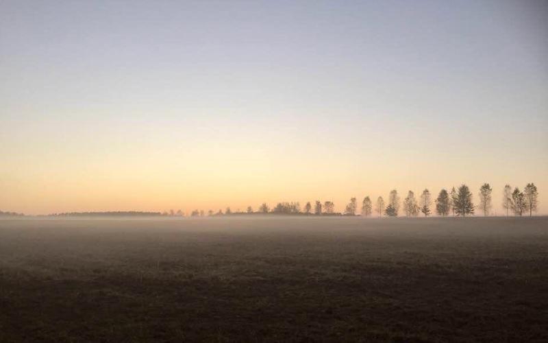 landschaft-nebel-baeume