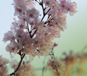 Gemeinsam den Frühling genießen